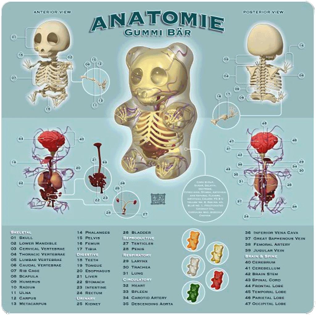 Großzügig Anatomie Eines Wordpress Theme Ideen - Anatomie Von ...