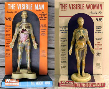 The Visible Man and Woman | SheWalksSoftly