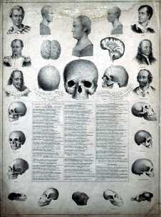 phrenology-chart