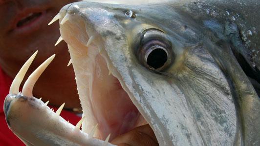 Image Odyssey: Fanged Fish | SheWalksSoftly