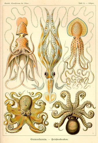 Gastropoda Book