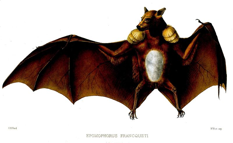 Body Weight Of A Painted Bat