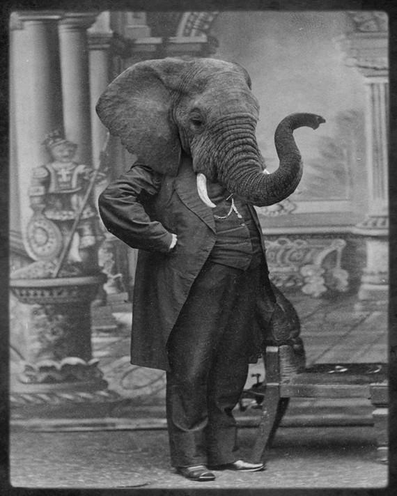 Швабра Elephant