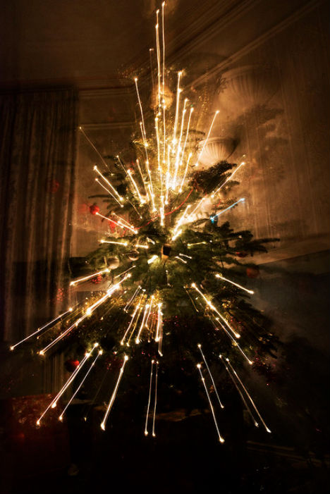 Christmas Tree Photography