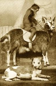 notorious_dog_goat_monkey