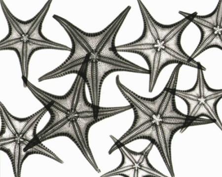 Starfishes.jpg