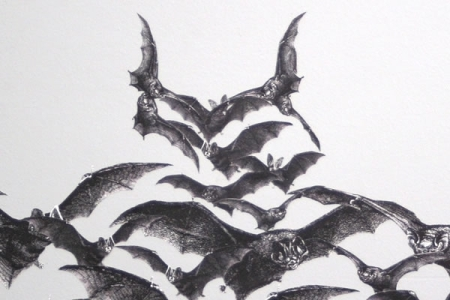 Bats-Wall-Decal_22155-l