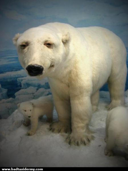 144_Polar-Bear