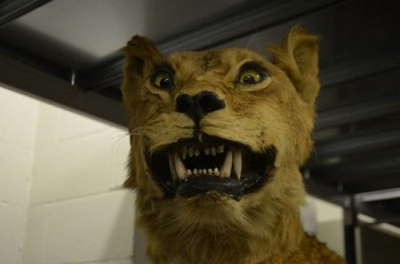 awful-bad-taxidermy-animals-0