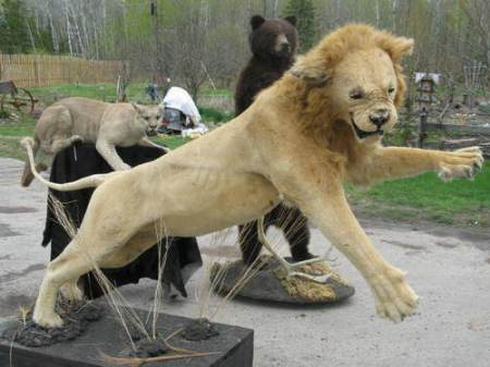 badtaxidermy10