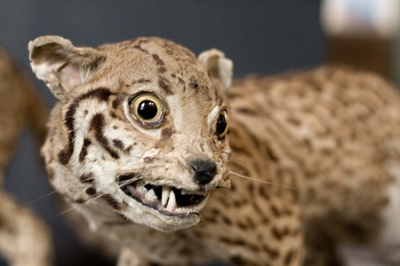 badtaxidermy11