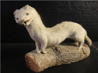 badtaxidermy5
