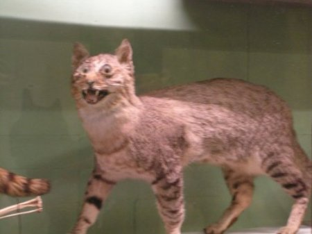 badtaxidermy6