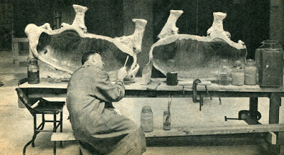 Taxidermy5