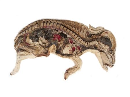 mummified_pig__14285.1411717787.1280.1280