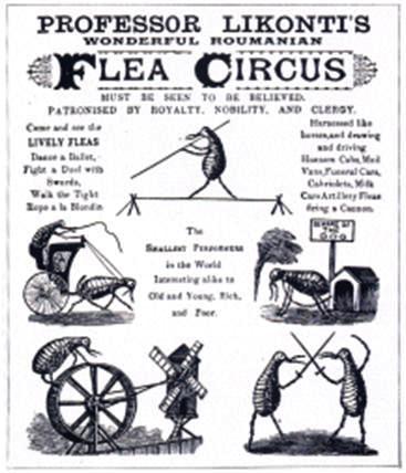 flea-circus-poster