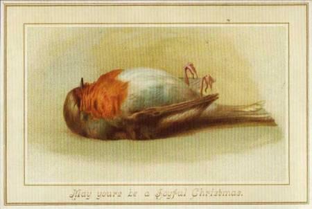 robin-dead